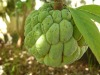 Natural Fruit Extract--- Sugar-apple Powder
