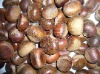 fresh chestnut Chinese origin
