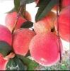 White/Yellow Peach Puree
