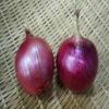 Wholesale organic onion 2012