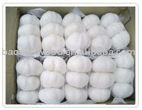 Big and New white garlic