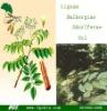 Lignum Dalbergiae Odoriferae Oil